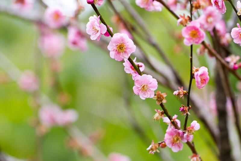 ของแต่งบ้านเก๋ๆ เทศกาลตรุษจีน ต้นไม้มงคล
